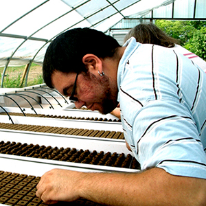 employee planting seeds in the greenhouse